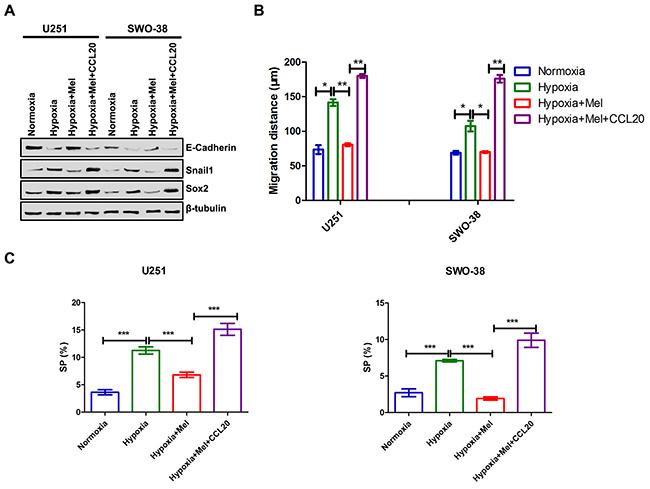 Melatonin regulated CCL20-mediated EMT, metastasis and cancer stem cell self-renewal in glioma cells.