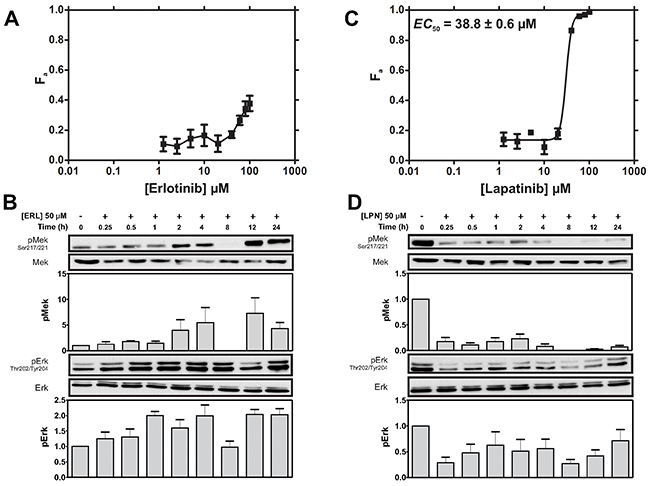 MDA-MB-231 cells display greater cytotoxic sensitivity to LPN compared to ERL.