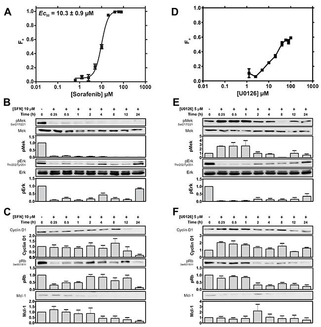 Cytotoxic sensitivity to the Raf inhibitor SFN and the MEK inhibitor U0126.