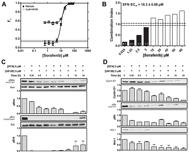 Synergistic potentiation of SFN-induced cytotoxicity by U0126.
