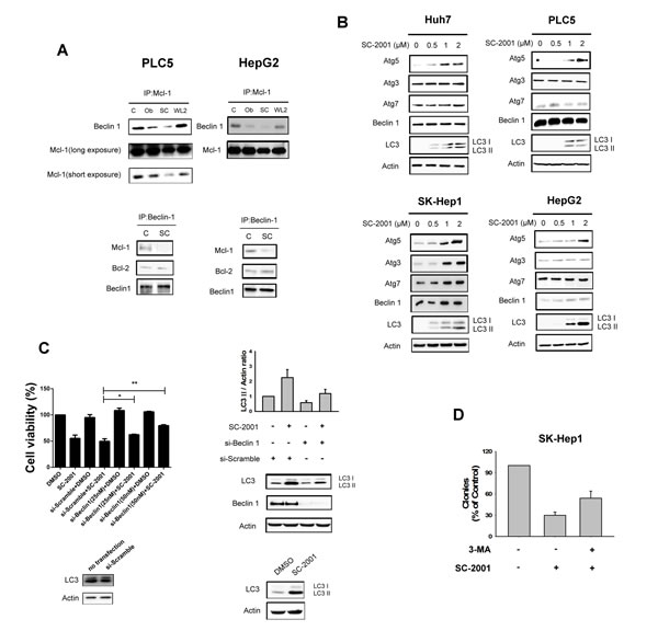 SC-2001 induces autophagic cell death and disrupts the MCL-1