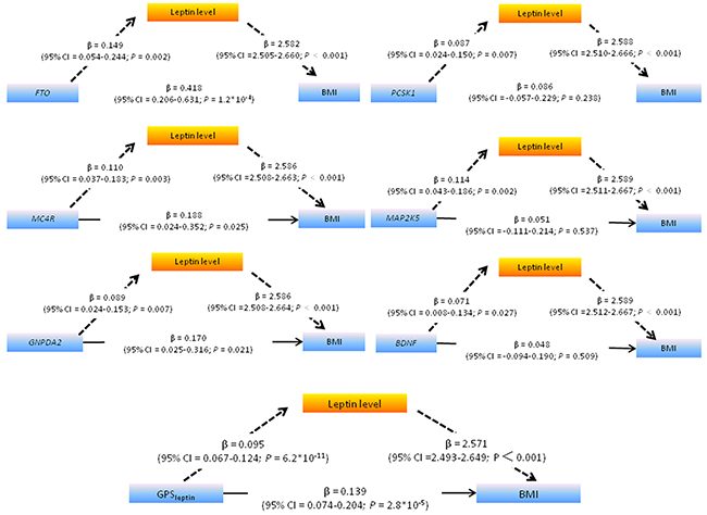 Path diagram showing that leptin significantly mediates the association between leptin-related SNPs /GPSleptin (including six leptin-related SNPs) and BMI.