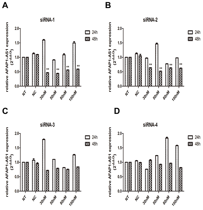 Knockdown of AFAP1-AS1 by siRNA transfection.