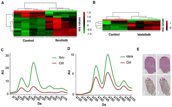 MALDI proteomic analysis of OCI-LY10 xenografts treated with ibrutinib and idelalisib.
