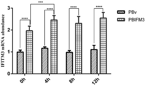 Effect of LPS on swine IFITM3 expression.