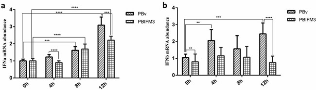 Effect of swine IFITM3 on the expression of IFNα and IFNβ.