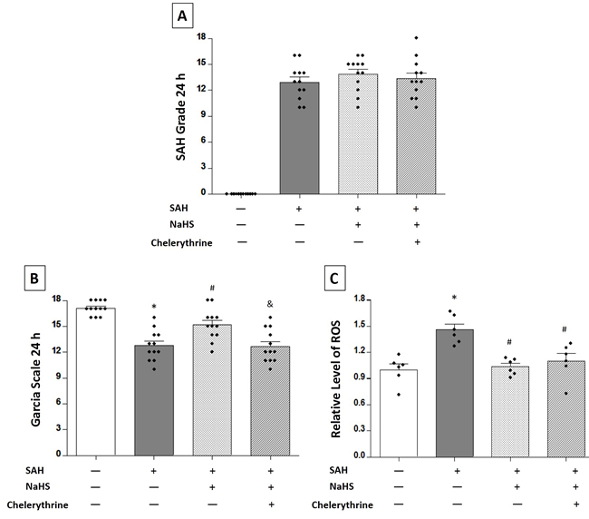 Exogenous NaHS reduced SAH-induced ROS levels in the brain tissues.