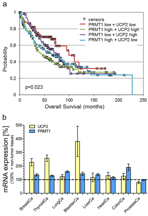 Survival analysis of lung carcinoma patients and mRNA expression analysis.