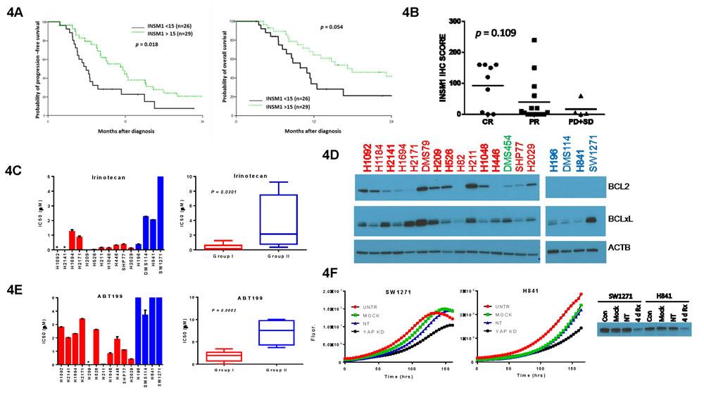 Chemo-sensitivity of SCLC subgroups.