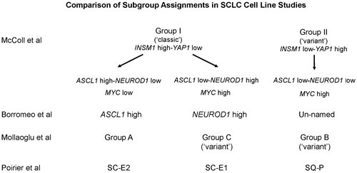 Comparison of SCLC subgroups among multiple studies.