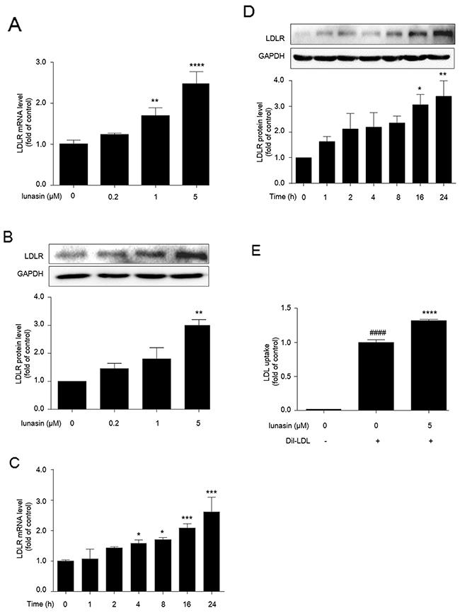 Lunasin up-regulates LDLR level and enhances LDL uptake in HepG2 cells.