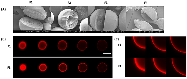(A) SEM images of solid microparticle (F1) and hollow microparticles (F2-F4)