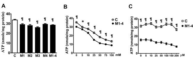 Decrease in the ATP production in MELAS fibroblasts.