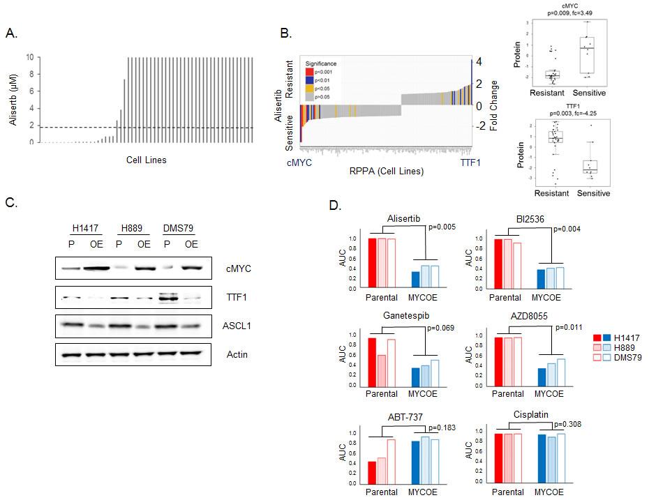 TTF1 and cMYC are biomarkers of response to alisertib