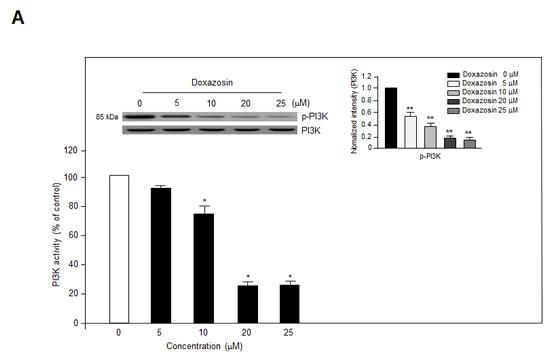 Doxazosin downregulates PI3K activity and Akt/mTOR/p70S6K phosphorylation