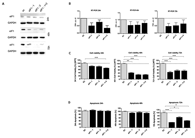 In vitro characterization of eIF1 knockdown effect in HCT116 cells.