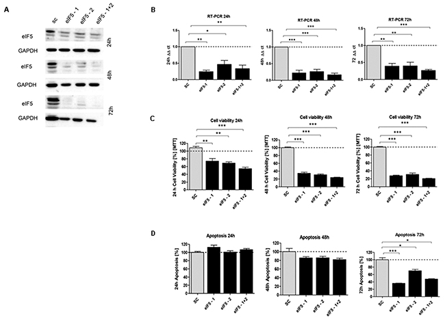 In vitro characterization of eIF5 knockdown effect in HCT116 cells.
