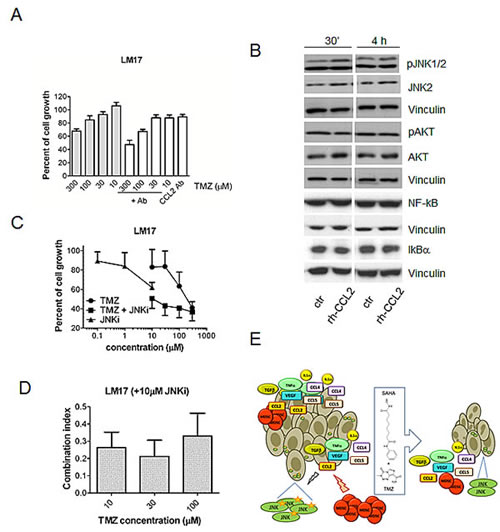 Role of CCL2 in response to treatment with temozolomide, SAHA or their combination in human melanoma cells.