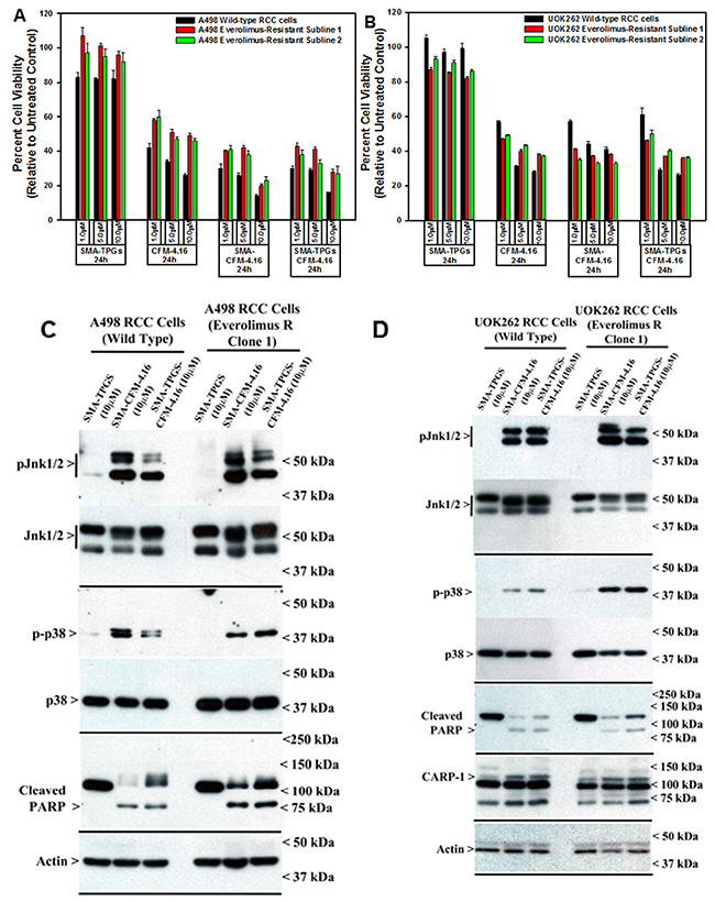 Nano-micellar formulations of CFM-4. 16 inhibits growth and stimulates apoptosis in parental and Everolimus-resistant RCC cells.