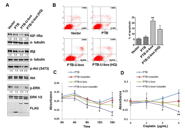 Targeted degradation of IGF-1R and IR attenuates Akt and MAPK signaling and increases the chemo-sensitivity of HepG2 cells.