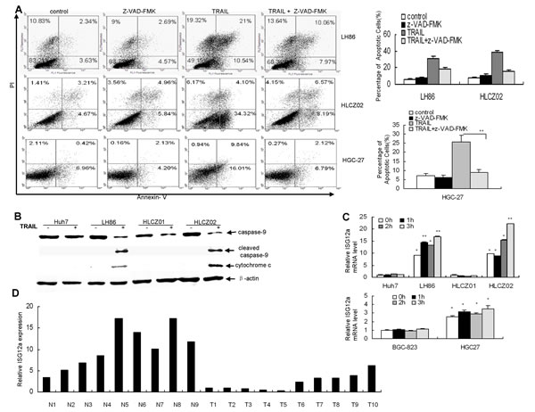 TRAIL induces ISG12a in sensitive cells and ISG12a is highly expressed in normal liver tissues and less invasive liver cancer tissues compared with aggressive liver cancer tissues.