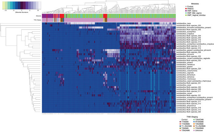 Heatmap differential abundance of significant (p<0.0001) Lactobacillus species&rsquo; OTUs in HNSCC when compared to JHU control samples and saliva, mid_vagina and vaginal_introitus samples from normal HMP participants with the variance stabilization method of QIIME&rsquo;s 1.9.1 and DESeq2 normalization for data after logarithmic transformation, shows differential enrichment of Lactobacillus_gasseri:Lactobacillus_johnsonnii, Lactobacillus vaginalis, Lactobacillus fermentum, Lactobacillus salivarius and Lactobacillus rhamnosus in 34 HNSCC samples when compared to 25 normal JHU saliva samples, as well as 290 saliva samples and 249 vaginal samples from the HMP.