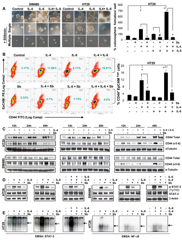 Effect of silibinin on the interleukin mediated pro-tumorigenic signals on CSC enriched colonospheres.