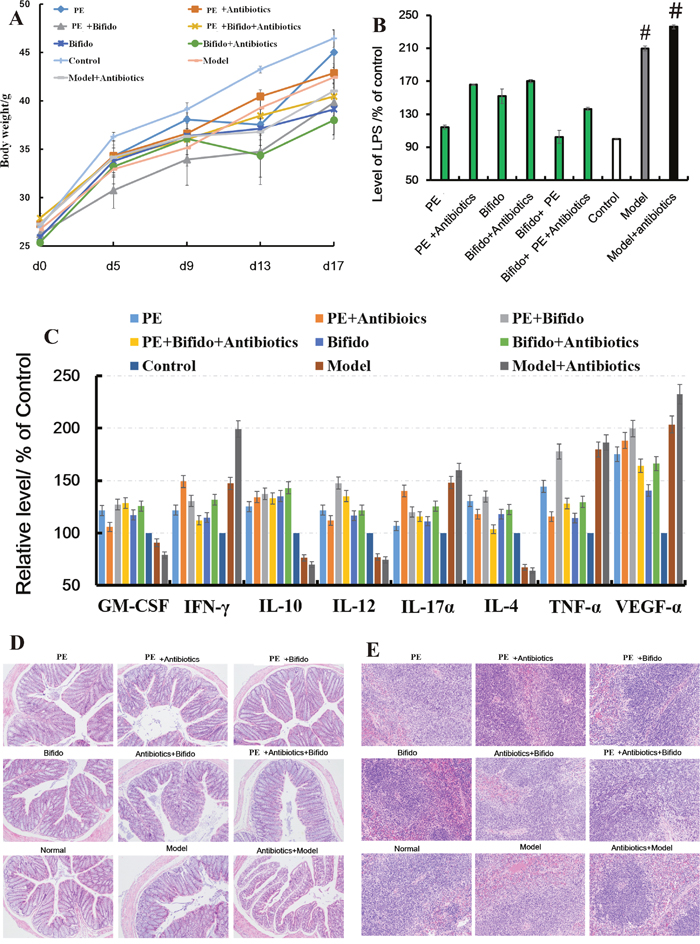 Polysaccharides extracted from H. erinaceus improved the pathological parameters of the TNBS-induced mice.