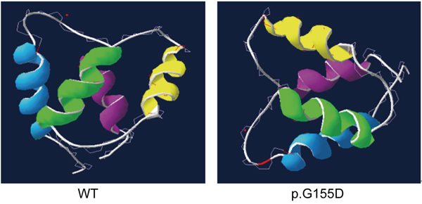 The three dimensional model of the CaBP4 protein containing the four EF-hand motifs (EF1-blue, EF2-green, EF3-yellow, and EF4-cyan) as revealed by the automated homology modeling program ESyPred3D.