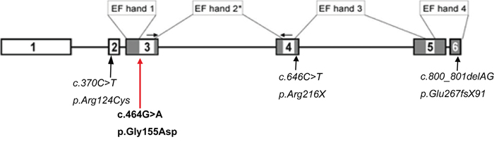 Schematic drawing of the CABP4 gene.