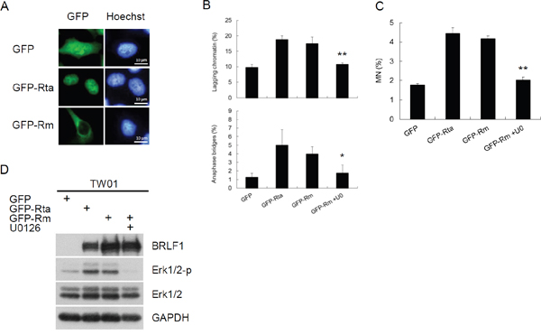 BRLF1 induces chromosome mis-segregation and micronucleus formation by triggering signaling pathway.