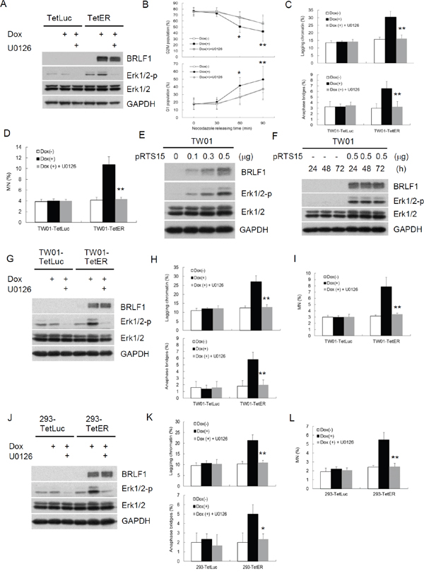 BRLF1 induces GI by chromosome mis-segregation through activation of Erk signaling.