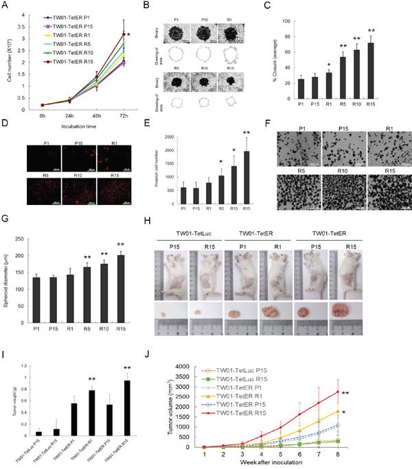 Recurrent BRLF1 expression aggravates the tumorigenic features of NPC cells.
