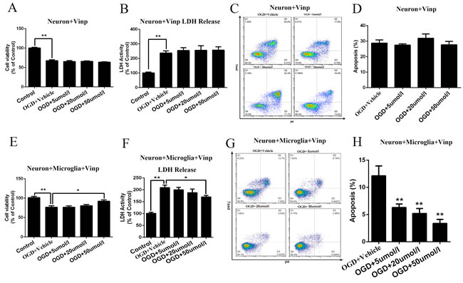 Vinpocetine increased the viability and LDH levels in primary cortical neurons and reduced neuronal apoptosis in the OGD model.