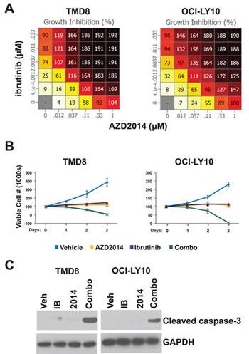 Ibrutinib and AZD2014 synergistically induce apoptosis.