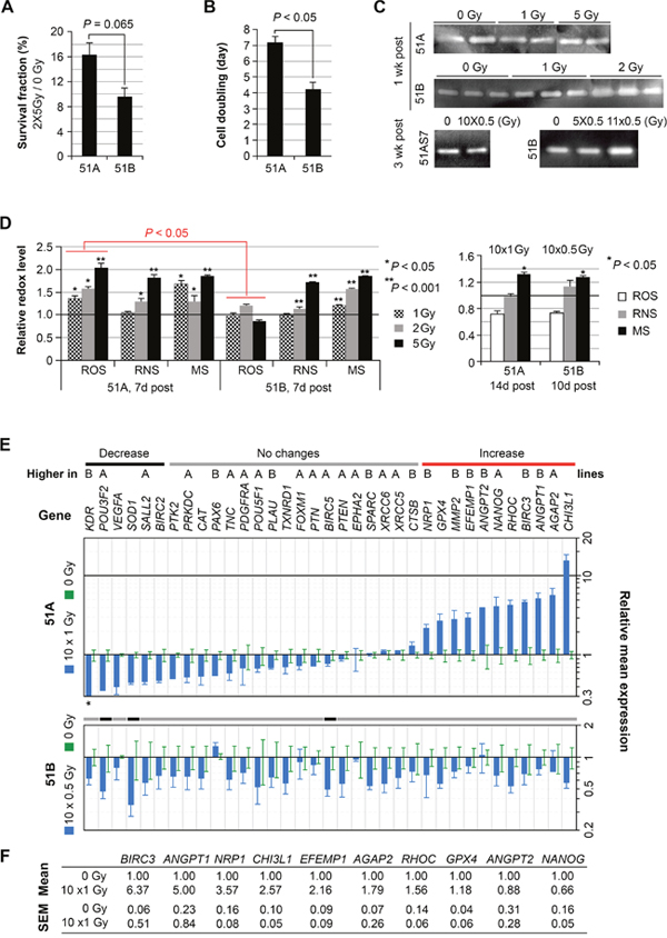 Differential radiation sensitivity and changes of molecular profiles of irradiated GBM subpopulation cells with and without DM, but with common and prolonged increase of mitochondrial superoxide.