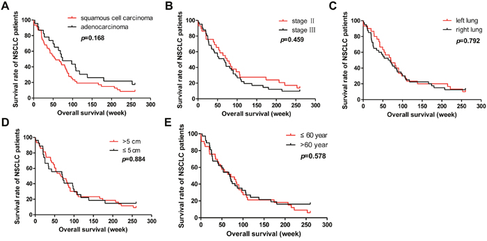 Analysis of the correlation between clinical features and 5-year survival rate of NSCLC patients.