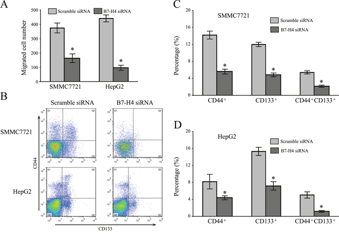 Downregulation of B7-H4 suppresses cell invasion and stemness in HCC cells.