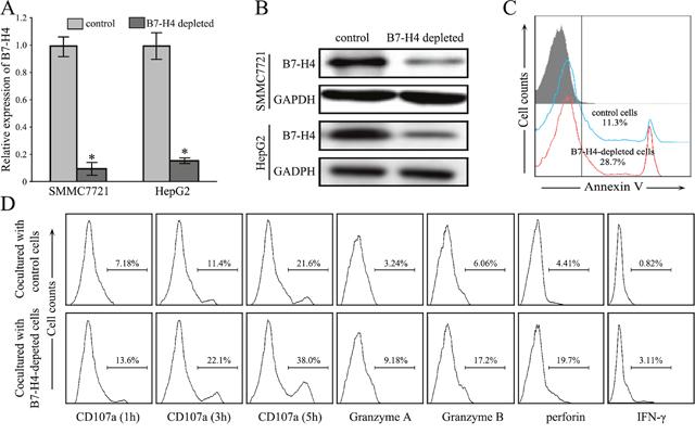 Depletion of B7-H4 restores CD8+ T cells anti-tumor immunity.