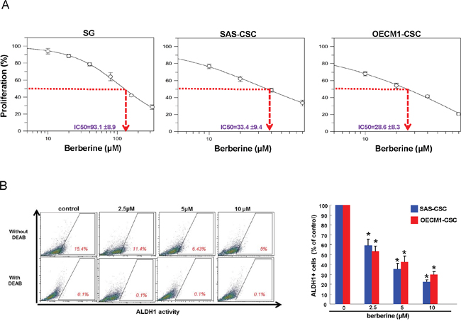 Cell viability and ALDH1 activity of OSCC-CSCs after berberine treatment.