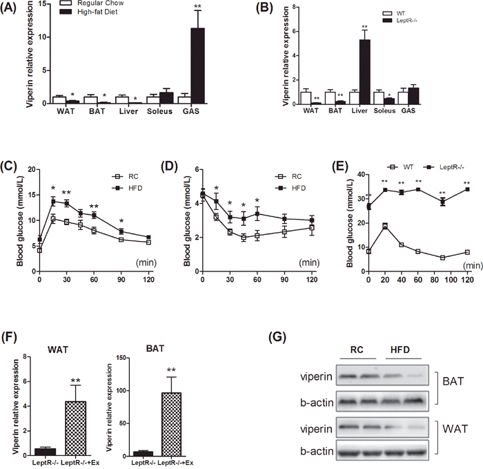Insulin resistance reduced viperin expression in white and brown adipose tissues.