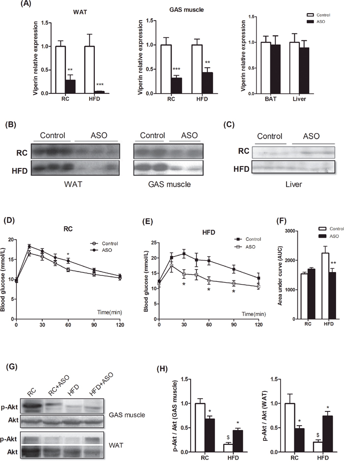 Viperin knockdown improved diet-induced glucose intolerance.