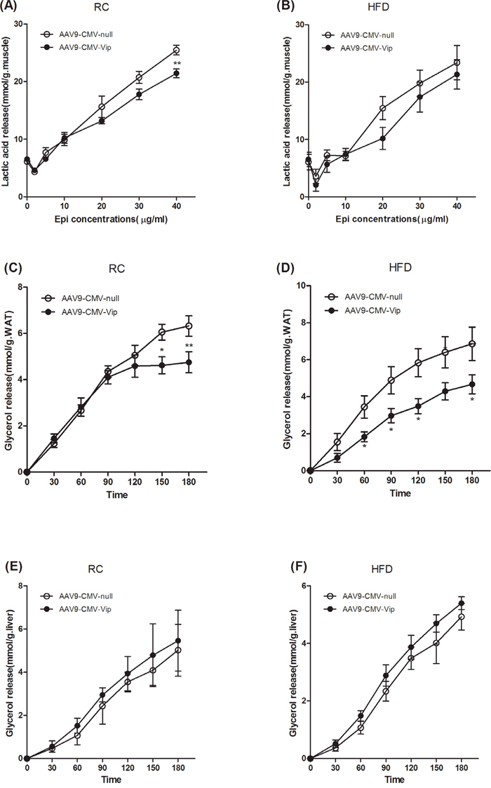 Forced expression of viperin repressed epinephrine-stimulated lipolysis in WAT.
