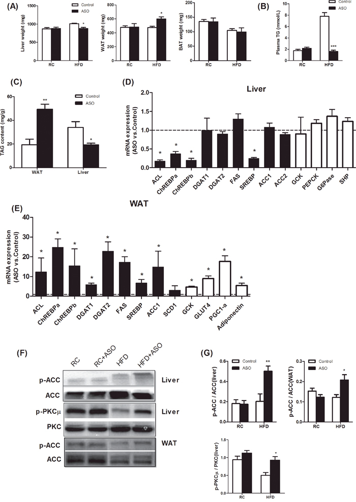 Viperin ASO induced reciprocal regulation of hepatic and adipose lipogenesis in HFD-fed mice.