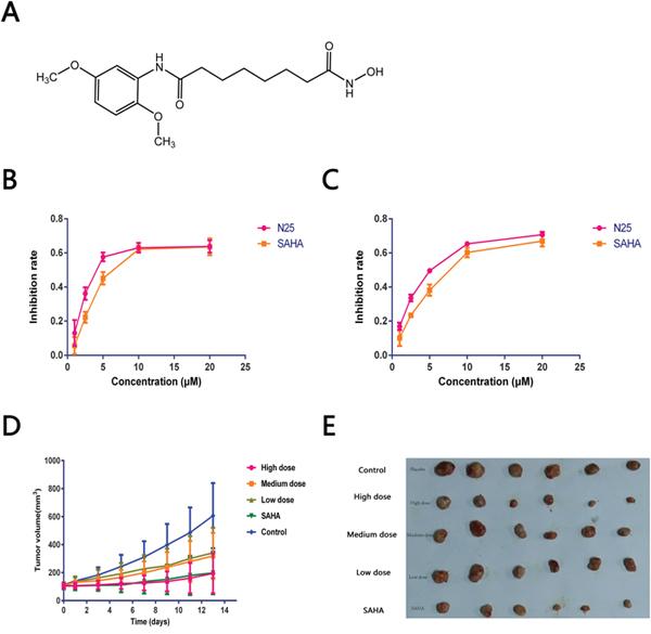Anti-tumor effects of N25.