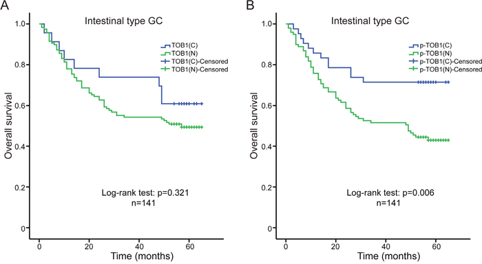 Kaplan-Meier analyses of overall survival in intestinal type GC patients (n = 141).
