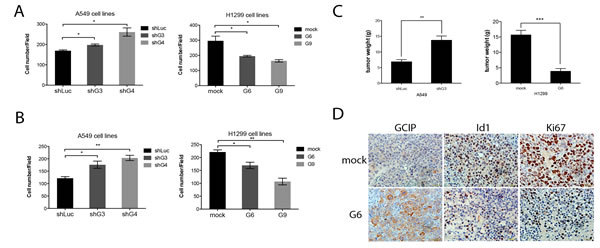 GCIP decreases and Id1 increases the migration and invasion of NSCLC cancer cells
