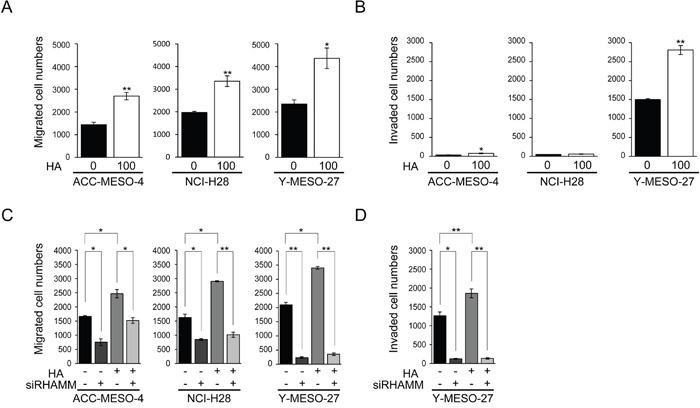 Stimulation of cell migration and invasion by HA in MPM cell lines is the YAP1/TAZ-RHAMM axis-dependent.