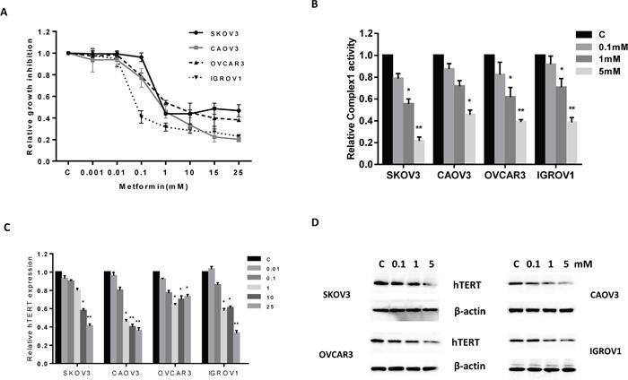 Effect of metformin on proliferation of human OC cells.