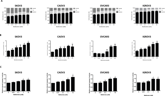 Metformin induced cell cycle G1 arrest and apoptosis.